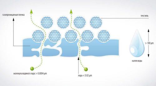 Структура мембраны